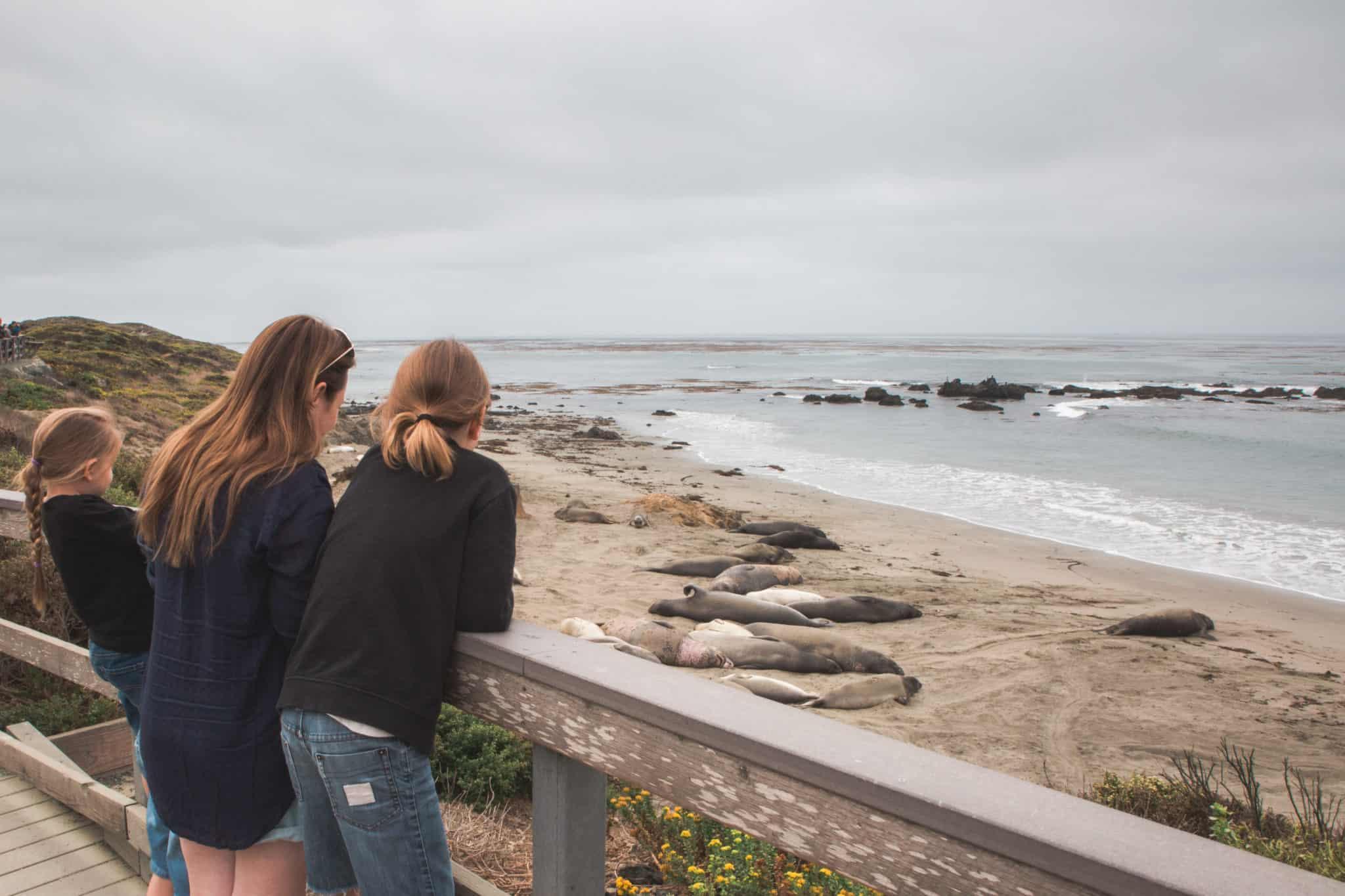 Elephant Seals - Piedras Blancas- Big Sur - Higway 1 - California - USA