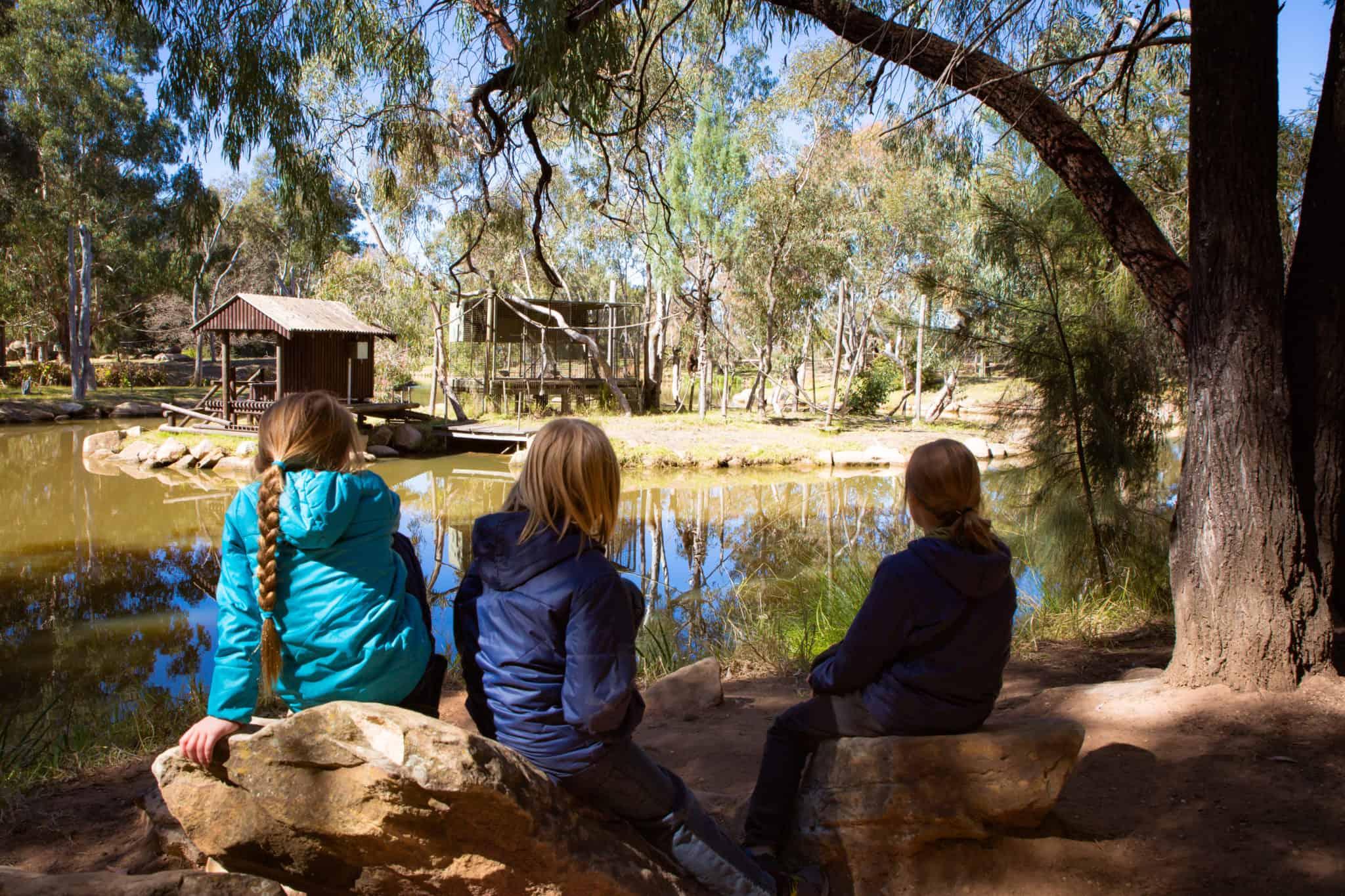 Travel With Meraki- Taronga Western Plains Zoo Dubbo Australia Gibbon