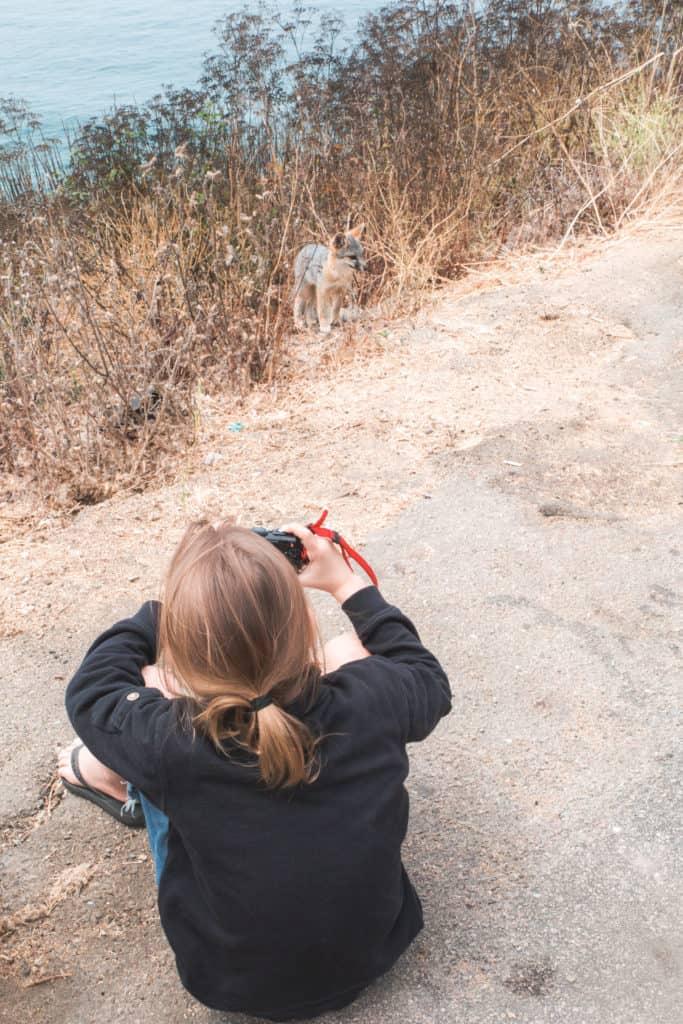 Coyote Big Sur - Higway 1 - California - USA