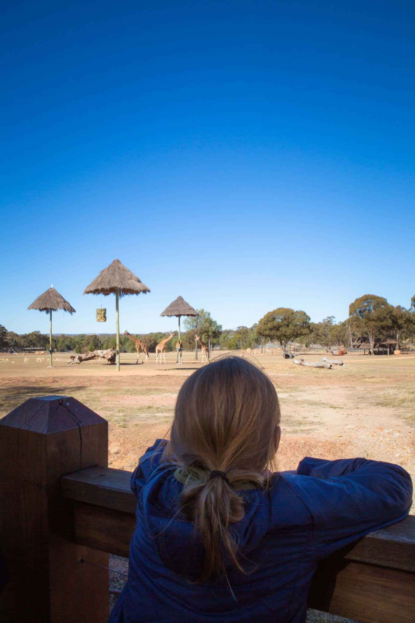 Travel With Meraki Taronga Western Plains Zoo Zoofari Lodge