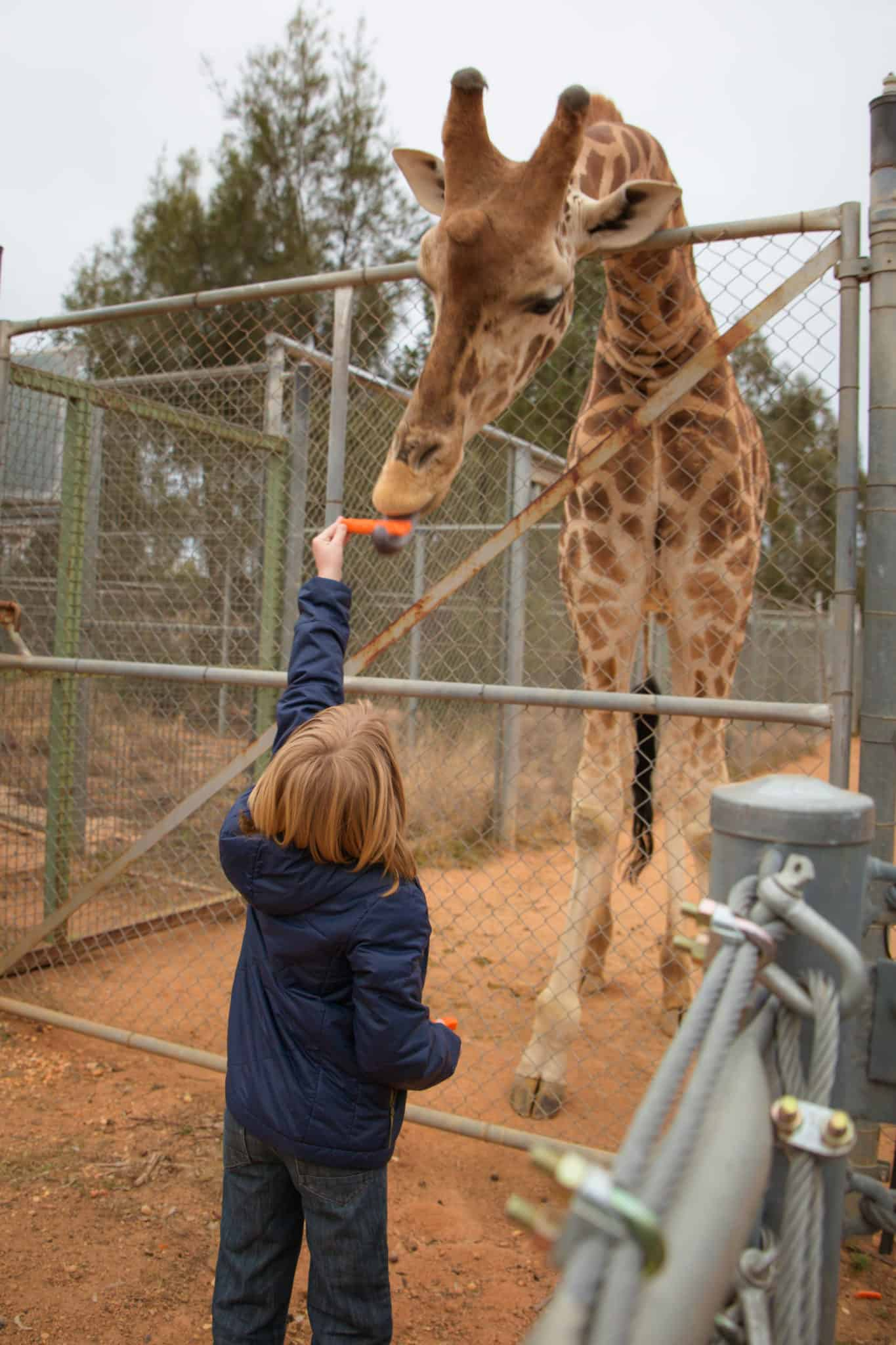 Travel With Meraki Taronga Western Plains Zoo