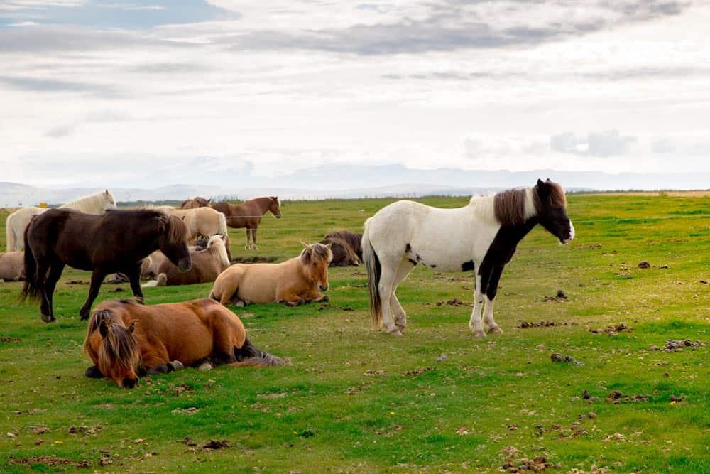 Iceland campsites